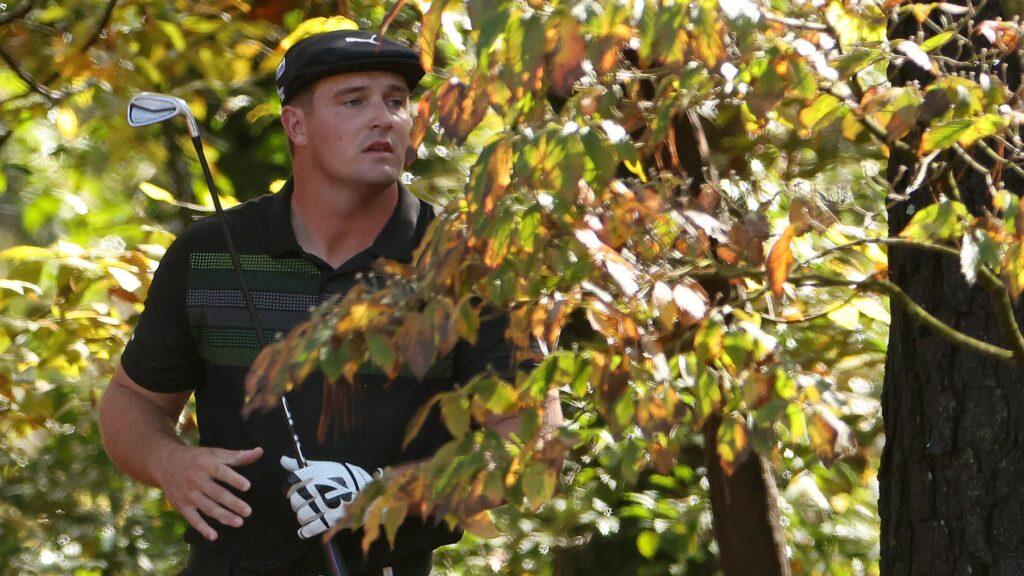 Bryson Dechambeau buske